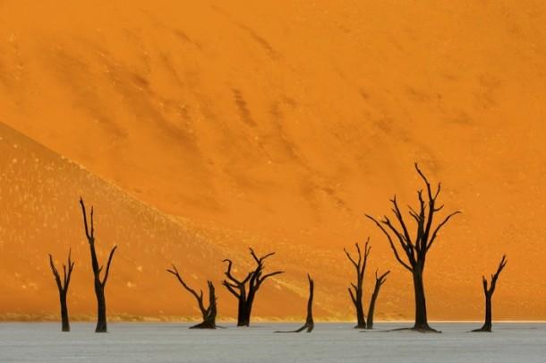 """Marsel van Oosten - """"The Valley of Death"""""""