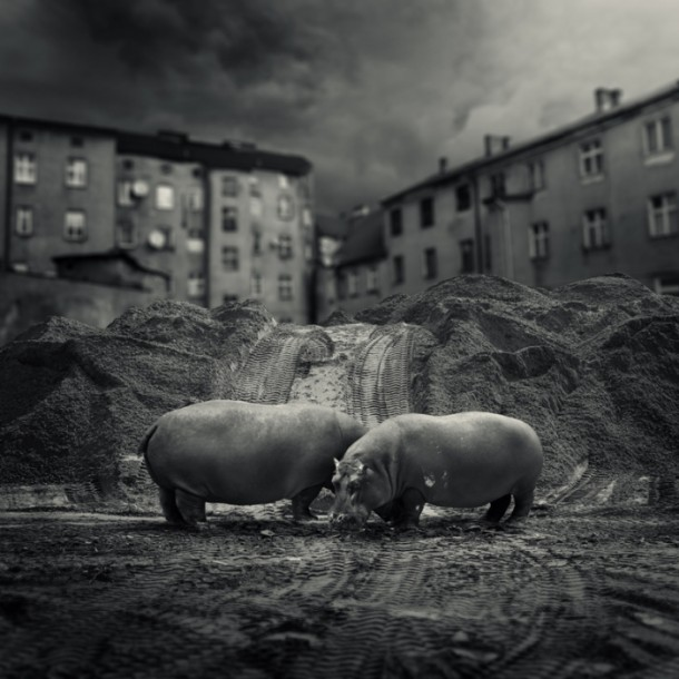 "Michal Giedrojc - ""Animals Dreams"""